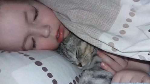 这只猫咪真会撒娇,半夜跳到小主人的床上要抱抱,太可爱了