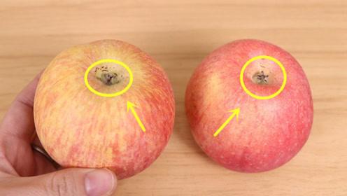 苹果好不好,看这里就知道了,学会这个诀窍,挑的苹果又甜又好吃