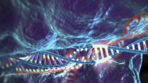 """""""基因编程""""成为现实,这项神奇的技术,对人类会有什么影响?"""
