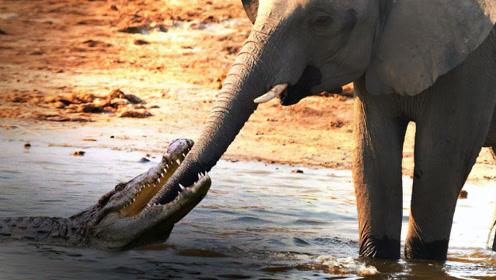 """鳄鱼趁大象喝水,一口咬住象鼻子!下一秒被""""甩功""""彻底蹂躏"""