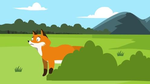 同学们,故事里的狐狸大多是阴险狡猾的,现实中的狐狸真的如此吗?
