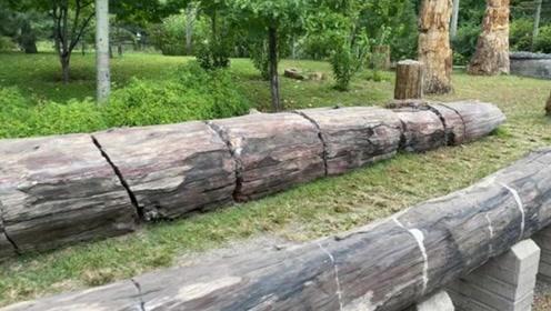 """小伙上山砍柴捡到""""树根"""",扔火里却烧不着,结果大大的福气啊"""