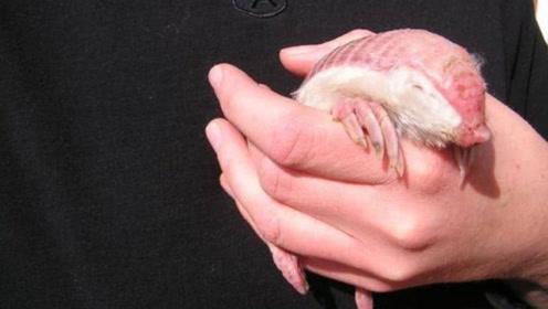 男孩捡回一只背是粉色铠甲的动物,父亲看到脸色一变,立马放生!