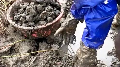 年轻人打工去了,花白了头的爷爷佝偻着腰,双手挖着深长在土中的马蹄果!