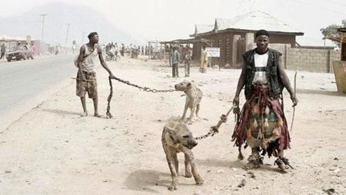 为什么鬣狗会惧怕非洲人?镜头拍下全程,原因让人不服不行!
