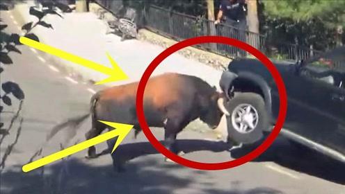 是有什么仇?公牛发疯似的径直朝越野车冲去,5秒后被顶报废!