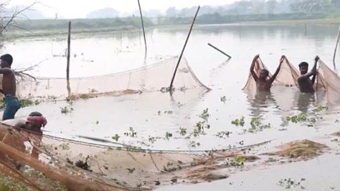 小时候每当过年时,村里人干水溏捞鱼,那场景你还记得吗?