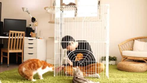 铲屎官故意把自己关进笼子,看到猫咪的反应,简直太不可思议
