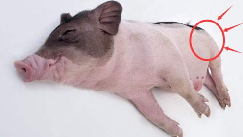 """生肖猪和哪个生肖是""""一对""""?缘分前世注定,今生携手白头不分离"""