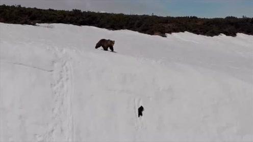 """""""从哪儿跌倒就从哪儿爬起来""""这只小熊完美的诠释了这一经典"""