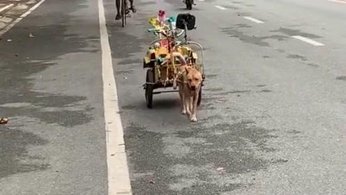 接小孩放学去咯,这是谁家做的小狗拉车,真的是太有创意了啊!