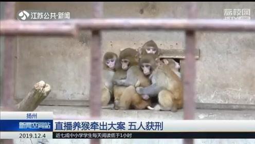 买家养死了20只猕猴!直播养猴牵出非法出售野生动物大案