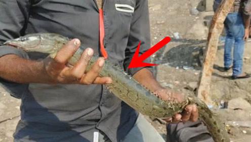 这种鱼身上像长了刀片一样,钓到它千万别用手碰!