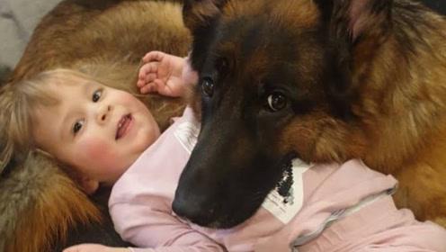 真是灵性有爱的狗狗,看到它们不顾一切为主人的表现,太让人感动