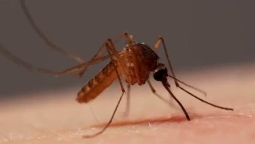 蚊子在咬人的时候,为什么最好别拍它?网友们看后:涨知识了