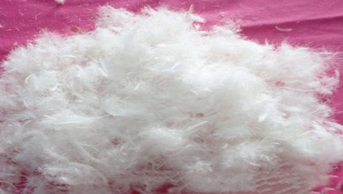 羽绒服和羽绒棉,两者到底有什么区别呢?今天算长见识了