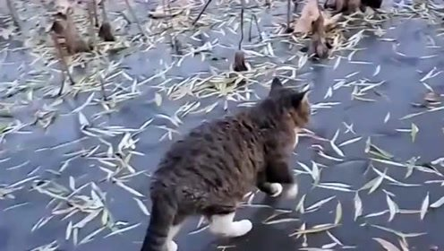 二十斤重的猫咪非要在冰上玩,你自己几斤几两心里没个数吗,也不怕掉下去!