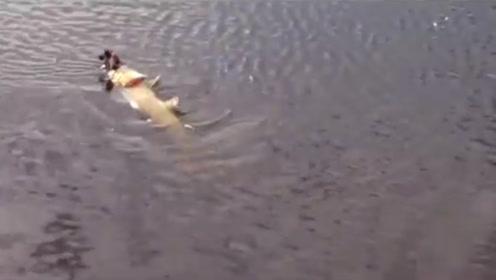 水中一不明物体发出奇怪叫声,男子放大镜头一看,惊呼佩服