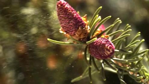 植物陆上繁殖的演变都经历了什么?漂亮的花朵写出了多少故事?