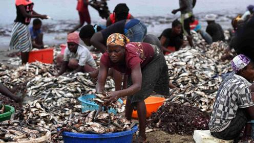 """非洲人饿着都不吃的""""东西"""",但在我国成奢侈品,被我国游客抢购"""