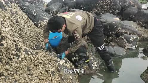 冬天退潮这海货多,小伙赶海老往石头堆里去,你知道干啥吗