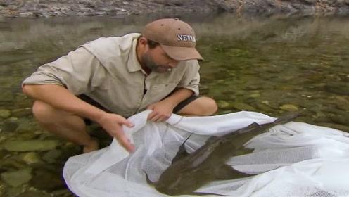 巨型河怪称霸湄公河,听到名字就知道有多霸气了