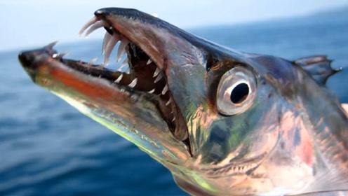 最有骨气的鱼看,被打捞后立马自爆,没人可以把它带回去