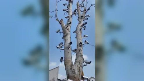 这是什么操作?树上放满摄像头360°无死角拍摄