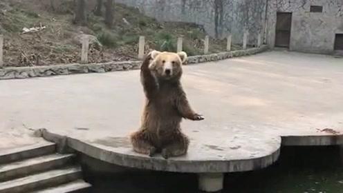 今天去动物园游玩,走到一只狗熊那的时候,它一只在做各种手势我也不懂!