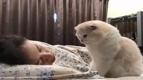 猫咪温柔的叫醒服务,看这只猫叫主人起床,我酸了!