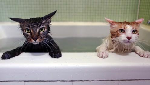 人死后不能让猫靠近?这真的只是迷信吗?原来一切都没那么简单