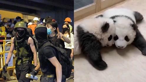 """无耻!港独黑手伸向大熊猫宝宝 这座动物园严词拒绝 无视""""碰瓷"""""""