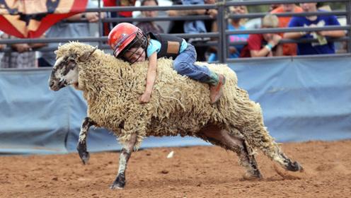 """西班牙传统的""""骑羊比赛"""",参赛者全是儿童,网友:不怕摔哭了?"""