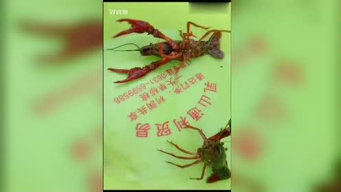 龙虾版,桃园三结义,有木有