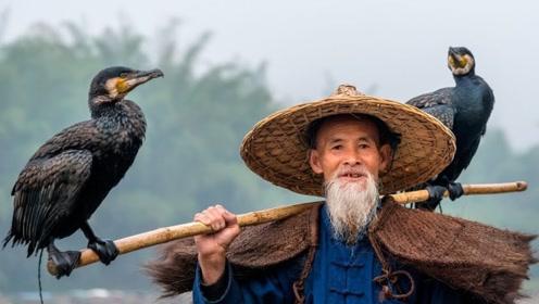 鸬鹚捕鱼——中国令人惊奇的捕鱼鸟,至今太少人能看见
