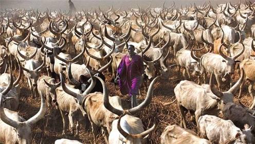 非洲这个国家,对牛热爱到疯狂的地步,甚至连排泄物都不放过