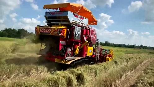 毫无疑问,泰国水稻收割机是收割机界颜值较高的!