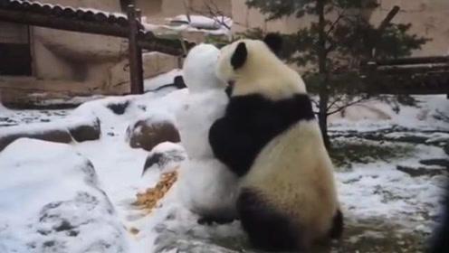 如何正确处理雪人?大熊猫:嗯,可以吃