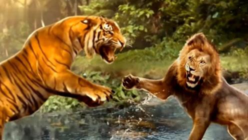 动物园狮子和老虎再发争执,场面有点激烈,这结局不一样啊