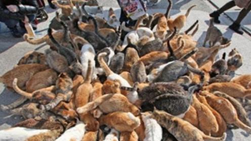日本这座岛上有数百只猫,简直是爱猫人士的乐园,吸引无数游客