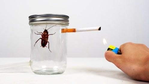 小伙突发奇想,利用实验让蟑螂连续抽一包烟,蟑螂会如何?