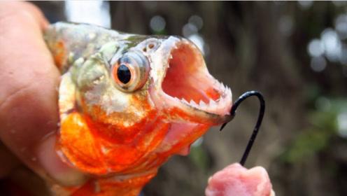 凶残的食人鱼到底能不能吃?老外亲自品尝,结局出乎意料
