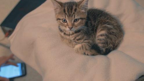 """小哥拆了自己的罗技音响,给猫咪做了一个""""按摩""""床,猫:舒服了"""