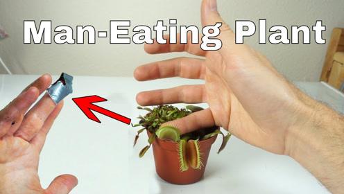 太作死!把手指放到捕蝇草里一天会怎样?千万不要轻易尝试!