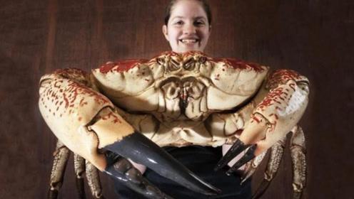"""螃蟹中的""""皇帝"""",重达70斤秒杀帝王蟹,敢吃的都是土豪"""