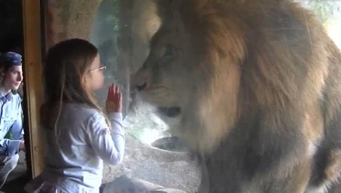狮子不想被梳毛,饲养员举手就打,狮子反应亮了!