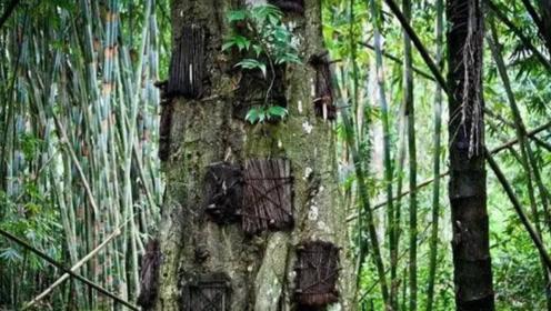 印尼最古老的丧葬仪式,被葬进大树中,看完让人难以接受