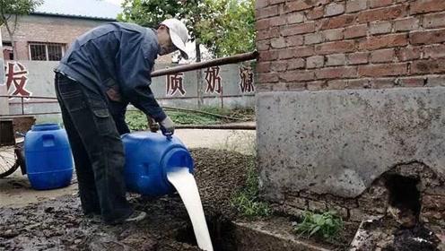 经济危机时,为什么美国宁愿把牛奶倒进河里,也不给穷人?今天终于明白了
