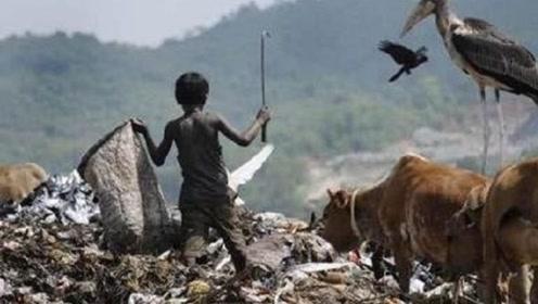 印度垃圾场养活了一种比人还大的鸟,当地人宁可天天捡垃圾也不吃它!
