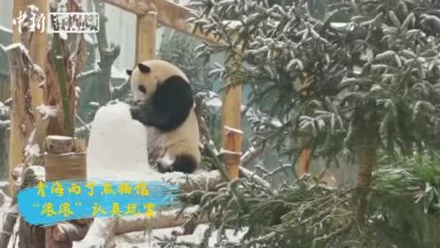 盘点冬日雪中精灵:爱它们,保护它们!